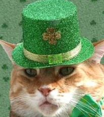 Happy St Patrick's Day from The Cat's Meow Cute Ginger, No Kill Animal Shelter, Elephant Party, Cat Flowers, Happy St Patricks Day, Saint Patricks, Ginger Cats, Here Kitty Kitty, Cat Art