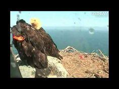 WE Bald Eagle Cam Poop - Production