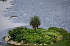 Puttenhalli Island [Pic: Shubho Banerjee]