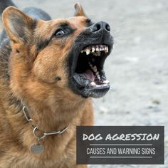 This article discusses warning signs of aggression in dogs that should not be ignored. The possible causes of these behaviors are also covered. Pay Attention To Me, Aggressive Dog, Warning Signs, Behavior, Dogs, Animals, Behance, Animales, Animaux