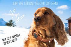 mirum.ru : ,,DogsSense – устройство, которое позволит в любой момент следить за здоровьем, активностью и местонахождением вашего пса. Сенсоры ошейника следят за пульсом, температурой тела, частотой дыхания и другими параметрами здоровья.'' Lovers Eyes, World Trends, Happy Animals, Leather Collar, Stone Art, Animal Pictures, Inventions, Your Dog, Gadgets