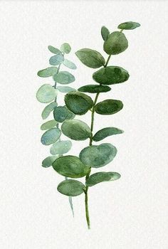 A delicate silver dollar eucalyptus leaves watercolour print - perfect for any room. Printed on heavyweight fine art watercolour paper. DETAILS + x Frame not included Watercolor Print, Watercolour Painting, Watercolor Flowers, Watercolors, Botanical Illustration, Botanical Prints, Posters Vintage, Plant Art, Painting Inspiration