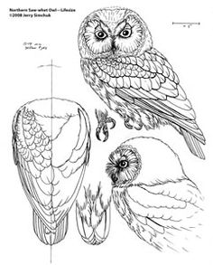 Free Wood Patterns for Carving Walking Sticks image search results Chip Carving, Tree Carving, Carving Tools, Wood Carving Patterns, Carving Designs, Whittling Patterns, Wood Carving For Beginners, Owl Patterns, Pattern Ideas