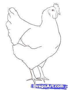 """Learn How to Draw a Chicken FREE Step-by-Step Online Drawing Tutorial , Farm animals, Animals free step-by-step drawing tutorial will teach you in easy-to-draw-steps how to draw """"How to Draw a Chicken"""" online. Chicken Drawing, Chicken Painting, Chicken Art, Chicken Tattoo, Rooster Painting, Rooster Art, Bird Drawings, Animal Drawings, Loro Animal"""