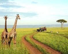 Safari - I want to see giraffes up close!