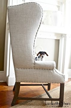 Great chair (the puppy is Josie, a mini dachshund)   |   Old Lucketts Store - Design House August 2013