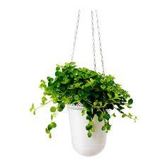 HIMALAYAMIX Potted plant IKEA