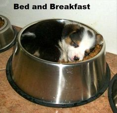 """Bed And Breakfast"" @1petstop http://www.funnypets.4ugood.com"