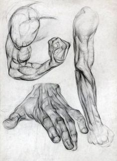 Exceptional Drawing The Human Figure Ideas. Staggering Drawing The Human Figure Ideas. Human Figure Drawing, Figure Drawing Reference, Anatomy Reference, Life Drawing, Arm Drawing, Human Body Drawing, Arm Anatomy, Human Anatomy Drawing, Body Anatomy