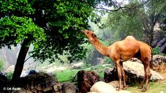 This makes you day dream. Very calming. Calmadow, Somalia.