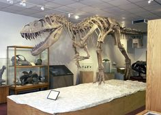 BYU Museum of Paleontology--L and I had one of our first dates here :)