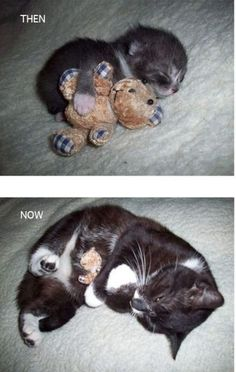 The cat grows, the stuffed bear stays the same size.