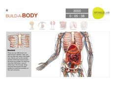 Build-A-Body (free) Interactive app for 6 body systems.  Build a body and learn about each part.