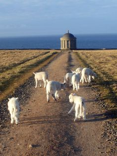 mussenden temple ireland -