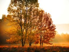 Beautiful Autumn - Panoramic View Wallpapers and Images View Wallpaper, Cool Wallpaper, Autumn Morning, Beautiful Nature Wallpaper, Tree Leaves, Wallpaper Free Download, Hd Picture, Fall Photos, Science Nature