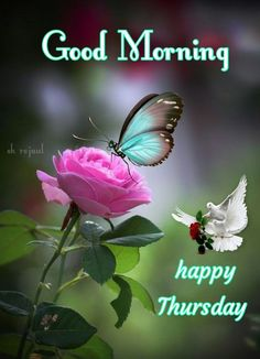 Thursday Morning, Happy Thursday, Good Morning Flowers Quotes, Thursday Greetings, Beautiful Morning, New Day, Painting, Allah, English