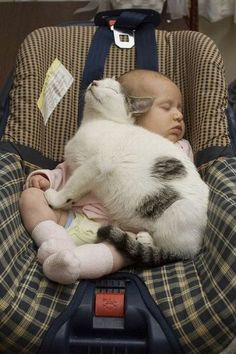 So cute! -no excuse to get rid of your cats when you have a baby. Be responsible. Keep an eye on your baby.