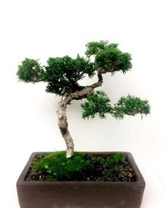 Something about #Bonsai trees makes me happy!