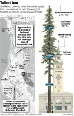 world's tallest tree HYPERION, discovered in 2006 • redwoods national park near orick, ca in humboldt county • exact location is secret!- ME & AL ARE GONNA FIND IT!