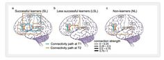 Oh, Boy, This Is Great! Researcher's Scans Show Brain Connections Growing When Learning New Language | Larry Ferlazzo's Websites of the Day…