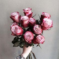 . Lesson Order Katalk ID vaness52 E-mail vanessflower@naver.com . #vanessflower #vaness #flower #florist #flowershop #handtied #flowergram #flowerlesson #flowerclass #바네스 #플라워 #바네스플라워 #플라워카페 #플로리스트 #꽃다발 #부케 #원데이클래스 #플로리스트학원 #화훼장식기능사 #플라워레슨 #플라워아카데미 #꽃수업 #꽃주문 #부케 #花 #花艺师 #花卉研究者 #花店 #花艺 . . #rose #장미 . . 매력적인 색감