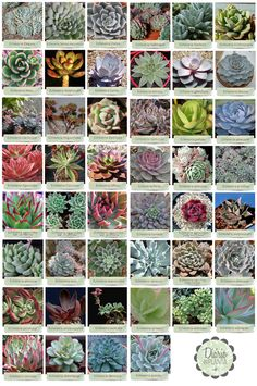 Suculentas y cactus Prevent Home Electrical Fires Inadequate electrical capacity is mainly due to in Identifying Succulents, Types Of Succulents Plants, Flowering Succulents, Cacti And Succulents, Planting Succulents, Cactus Plants, Garden Plants, House Plants, Different Types Of Succulents