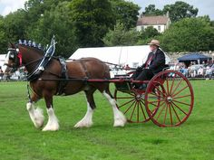 Pix For > Horse Pulling Carriage