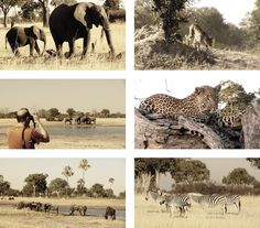 Zimbabwe Safaris to Davisons Camp in the Hwange National Park in June 2013
