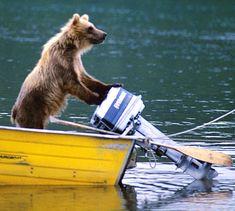 Gone fishing ... bear aboard a motorboat