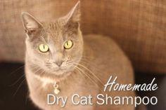 Dry Cat Shampoo Text
