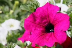 Herényi Virágút 2020. Virág- és dísznövénykertészeti kiállítás és vásár - Programturizmus Plants, Plant, Planets