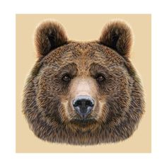 Illustrated Portrait of Bear on Beige Background Plakat autor ant_art19 w…