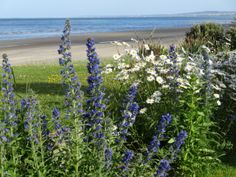 Six exclusive 300 year old luxury thatched holiday cottages in Ireland. Set on the beach front in the tranquil surroundings of large organic flower gardens.