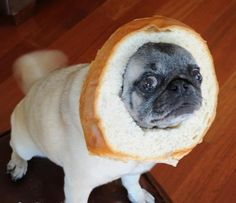 Loaf bread of pug funny