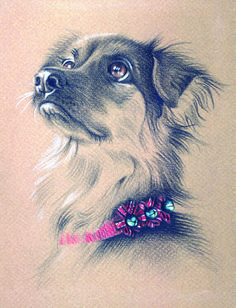 """""""California Christmas Canine"""" - colored pencil on colored paper"""