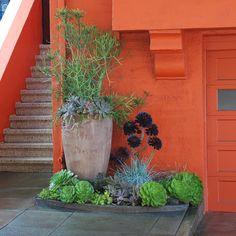 Succulent garden vignette - Bay Area Garden Consultation, small space gardening, small space container garden