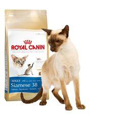 Alimento específico para #gato #Siamés  #Maskokotas #RoyalCanin #gato #cat Siamese 38 Royal Canin Maskokotas