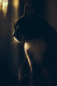 Daydreamer, at Society6 . All products -->  http://society6.com/product/daydreamer-mxt_print?curator=happymelvin&utm_content=bufferbe5fb&utm_medium=social&utm_source=pinterest.com&utm_campaign=buffer #cat #society6 #portrait #pet #dreamer