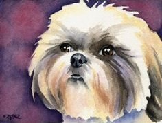 Shih Tzu Dog Watercolor Painting 8 X 10 Art Print Signed by Artist DJR for sale online Watercolor Artist, Watercolor Animals, Watercolor Paintings, Watercolor Paper, Watercolors, Shih Tzu Hund, Shih Tzu Puppy, Shih Tzus, Dog Signs