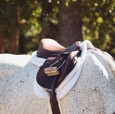 Horse Gear, Horse Tack, Cute Horses, Beautiful Horses, Horseback Riding Outfits, Horse Riding Clothes, English Riding, Equine Photography, Equestrian Style