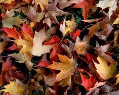 outono -