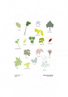 LANGARITA NAVARRO - especies plantas colores