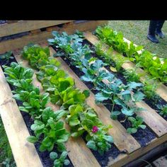 Pallet Planter. No digging, tilling or building required
