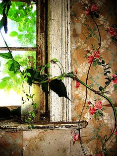 ♂ Aged with beauty rustic wall old style window with flowers