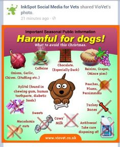 for your dog's health