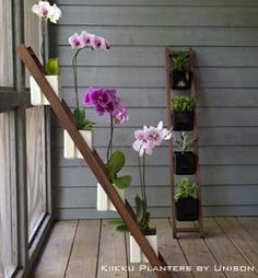 How To Care For A Phalaenopsis Orchid: Video