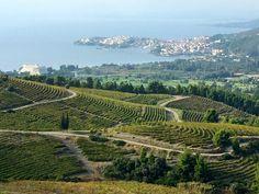 Wine Roads of Northern Greece: Domaine Porto Carras | spaswinefood