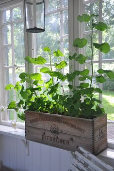 Indoor Garage with Plants Swedish Cottage, Cottage Style, Vibeke Design, Estilo Country, Marquise, Vintage Farmhouse, Plant Decor, Country Decor, Houseplants