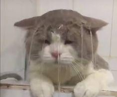 Cute Baby Cats, Cute Little Animals, Cute Funny Animals, Kittens Cutest, Cats And Kittens, Funny Cats, Gato Gif, Sad Cat, Cat Icon