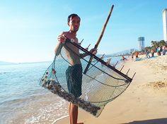 Tin học cho mọi người...: Cầu gai cát xuất hiện bất thường trên biển Nha Tra...